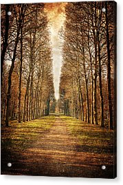 Acrylic Print featuring the photograph Path In The Woods / Versailles by Barry O Carroll