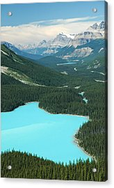 Peyto Lake. Banff National Park In Alberta. Acrylic Print