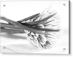 Chive Blossom Acrylic Print