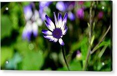 Purple Flower Acrylic Print by Barbara Walsh