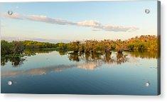 Reflection Of Trees In A Lake, Anhinga Acrylic Print