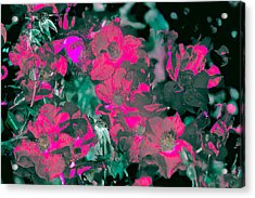 Rose 72 Acrylic Print by Pamela Cooper