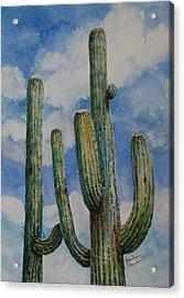 Saguaro Cactus Acrylic Print