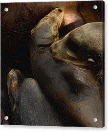 3 Sea Lions Acrylic Print by Jack Zulli