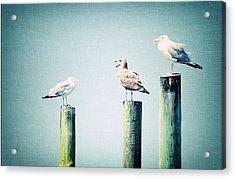 3 Seal Gulls Acrylic Print by Dick Wood