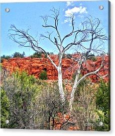 Sedona Arizona Dead Tree Acrylic Print by Gregory Dyer