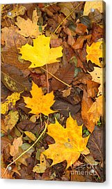Acrylic Print featuring the photograph 3 Shades Of Yellow by Jim McCain