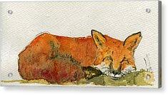 Sleeping Red Fox Acrylic Print