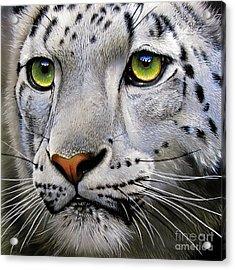 Snow Leopard Acrylic Print by Jurek Zamoyski