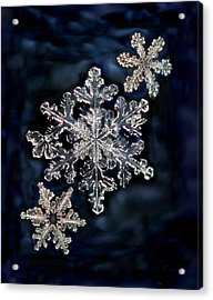 3 Snowflakes For The Price Of One Acrylic Print by Lorella  Schoales