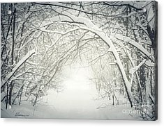 Snowy Winter Path In Forest Acrylic Print by Elena Elisseeva