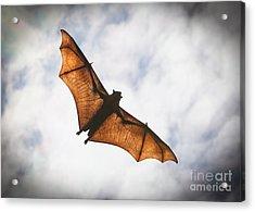Spooky Bat Acrylic Print