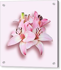 Acrylic Print featuring the photograph Spray Of Pink Lilies by Jane McIlroy