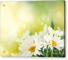 Spring Background Acrylic Print by Mythja  Photography