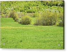 Spring Farm Landscape In Maine Acrylic Print
