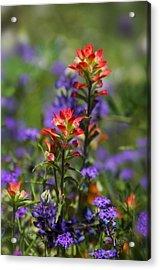Spring Flowers  Acrylic Print by Saija  Lehtonen