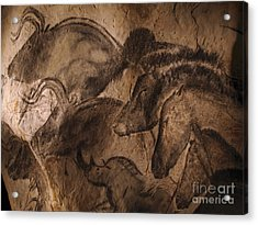 Stone-age Cave Paintings, Lascaux Acrylic Print
