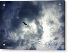 Acrylic Print featuring the photograph Storm Flyer by Marilyn Wilson