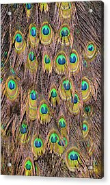 Tail Feathers Of Peacock Acrylic Print by George Atsametakis