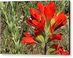 Texas Paintbrush Acrylic Print
