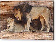 The Feline Honeymooners Acrylic Print