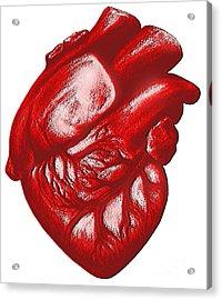 The Human Heart Acrylic Print by Dennis Potokar