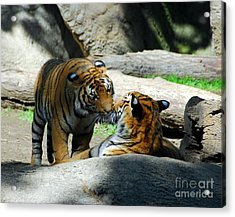 Tiger Love 2 Acrylic Print