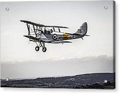 Tiger Moth Acrylic Print
