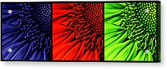 3 Tile Sunflower Colors Acrylic Print by Mark Kiver