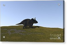 Triceratops Walking Across A Grassy Acrylic Print