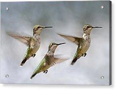 Trio Acrylic Print by Betsy Knapp