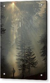 Usa, California, Forest Fire, Sequoia Acrylic Print