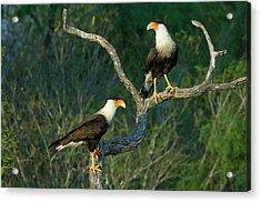 Usa, Texas, Rio Grande Valley, Starr Acrylic Print by Jaynes Gallery