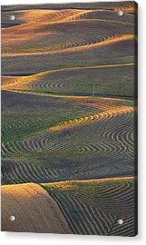 Usa, Washington State, Palouse Region Acrylic Print