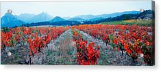 Vineyards In The Late Afternoon Autumn Acrylic Print by Panoramic Images
