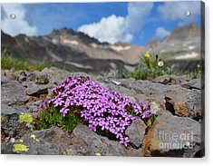 Acrylic Print featuring the photograph Wildflowers by Kate Avery