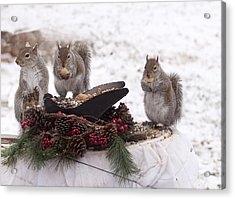 3 Wise Squirrels Acrylic Print