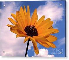 Yellow Flower Acrylic Print by Elvira Ladocki