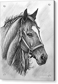Acrylic Print featuring the drawing Zenyatta by Patrice Torrillo