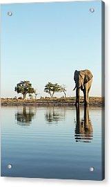 Africa, Botswana, Chobe National Park Acrylic Print by Paul Souders