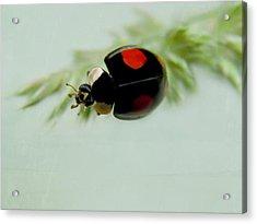 Ladybug Acrylic Print by Heike Hultsch