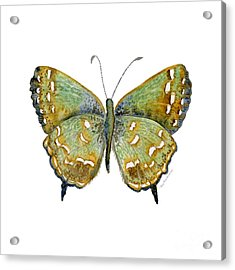 38 Hesseli Butterfly Acrylic Print