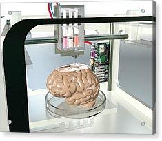 3d Printed Brain Acrylic Print by Christian Darkin