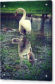 All In The Family Acrylic Print by Cyryn Fyrcyd