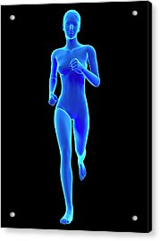Anatomy Of Runner Acrylic Print