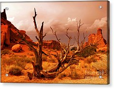 Arches National Park Acrylic Print by Sophie Vigneault