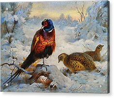 Cock And Hen Pheasant In Winter Acrylic Print by Archibald Thorburn