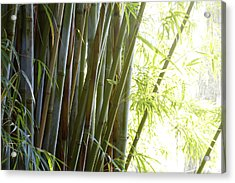 Bamboo Acrylic Print by Les Cunliffe
