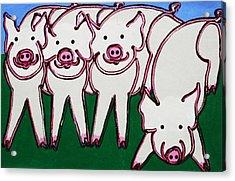 4 Beige Pigs Acrylic Print by Matthew Brzostoski