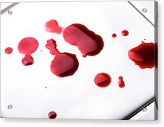 Blood Spatter Acrylic Print by Cordelia Molloy